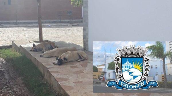 Prefeitura de Patos afirma que solução para animais abandonados é a criação do Centro de Zoonoses