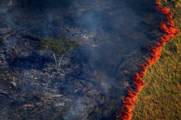 UMA POR DIA... A Amazônia está queimando dentro da gente